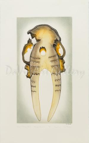 'Ancient Walrus Skull' by Tim Pitsiulak - Cape Dorset