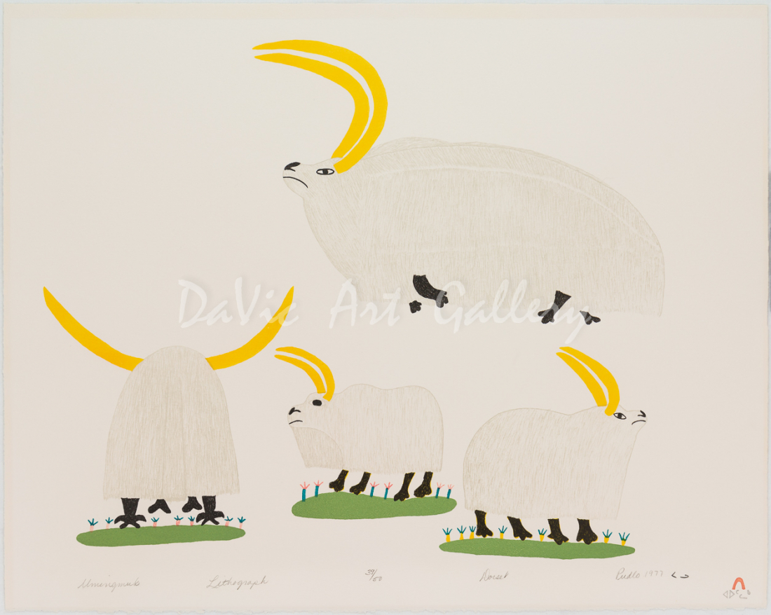 'Umingmuk' by Pudlo Pudlat - Inuit Art from Cape Dorset 1977 print collection presented by DaVic Art Gallery