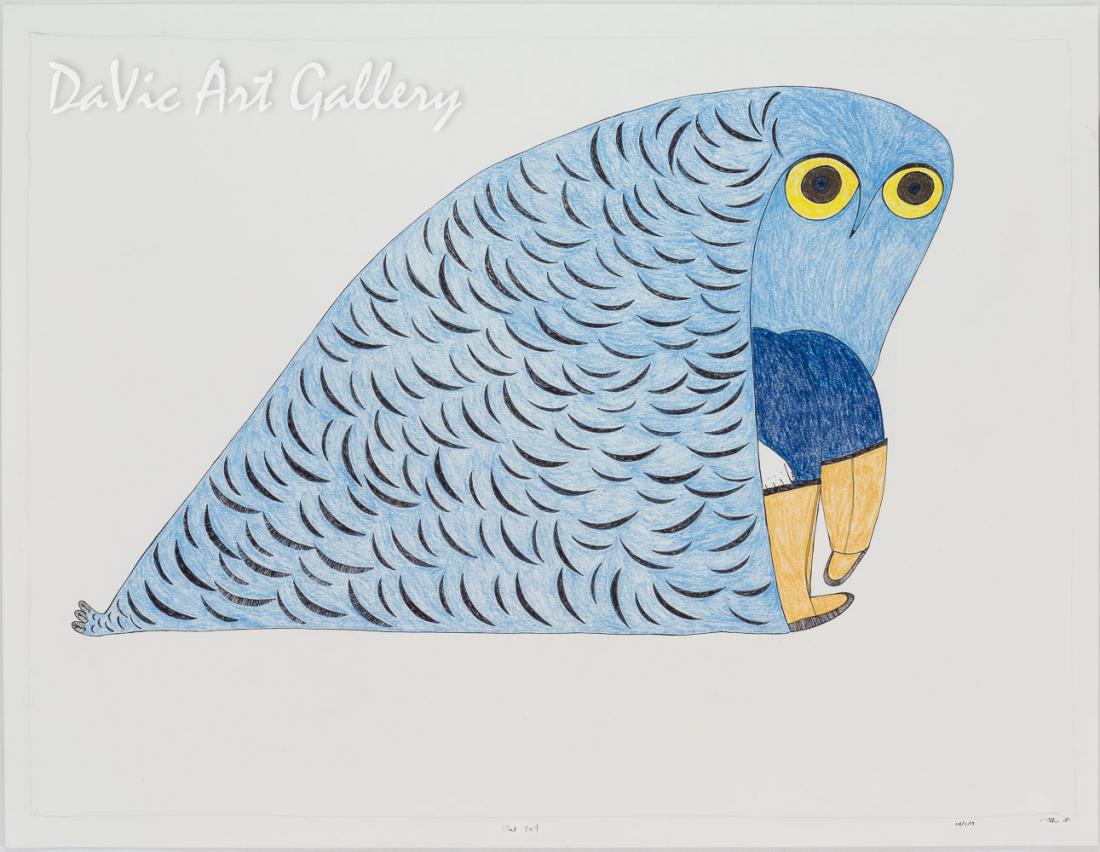 'Blue Owl' by Ningeokuluk Teevee - Cape Dorset original Inuit Art drawing