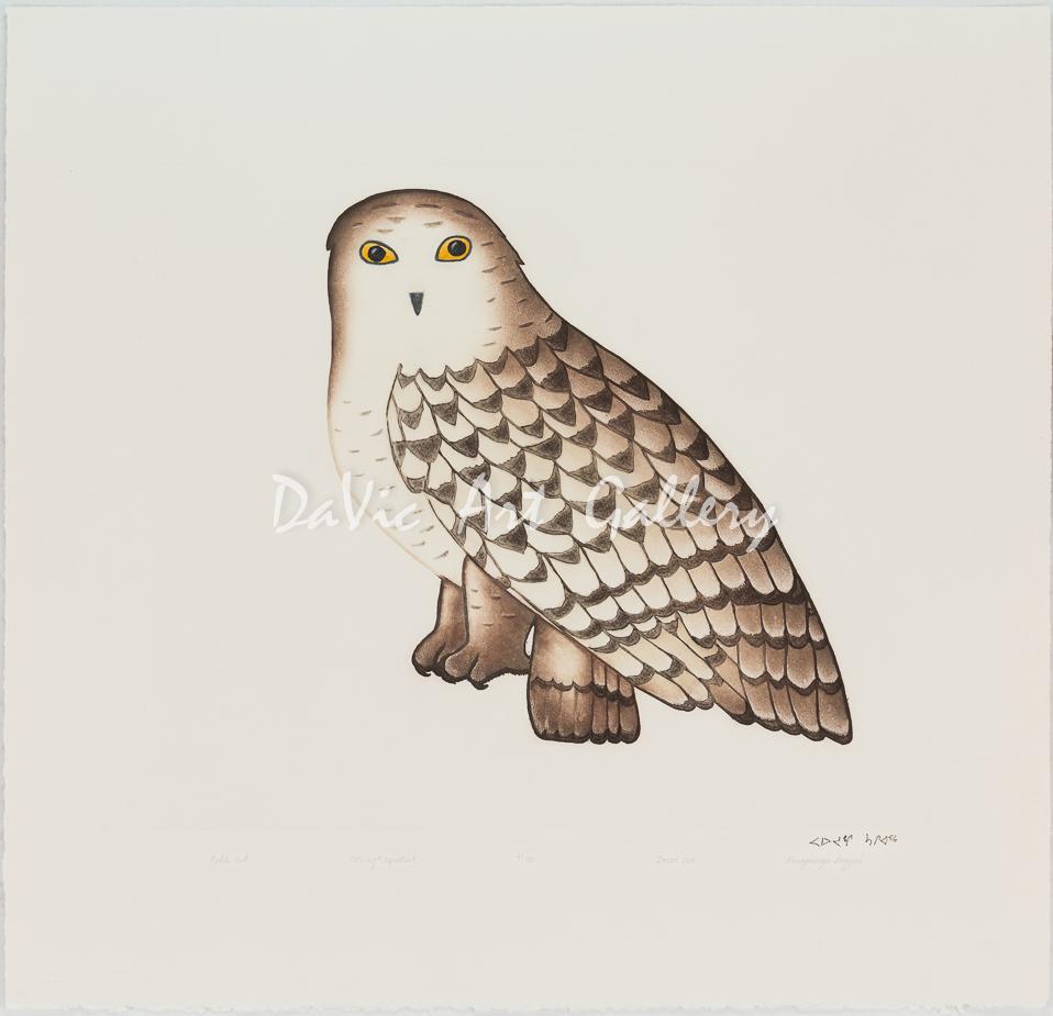 Noble Owl by Pauojoungie Saggiak - Cape Dorset 2018